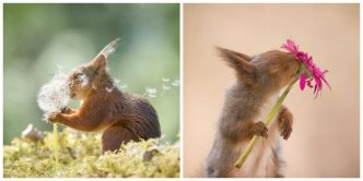 Cute Squirrels Photographed