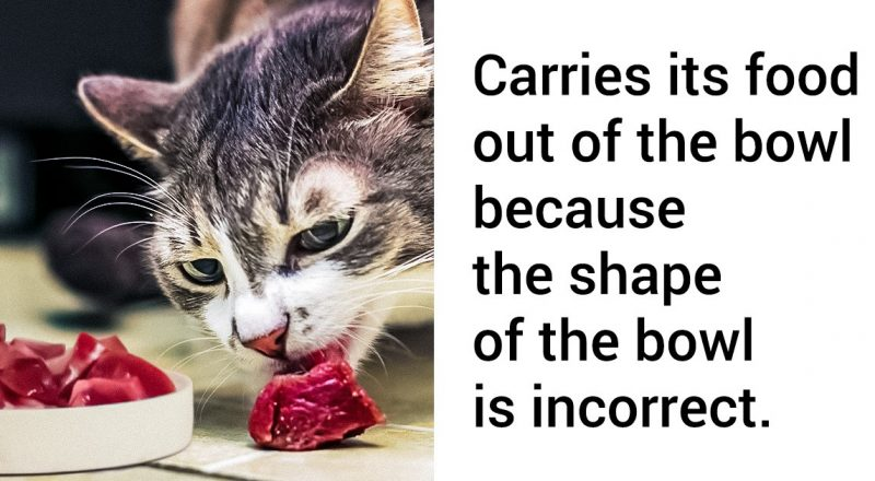 Common Cat Owner Mistakes